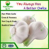 Blanc pur pour la vente d'ail avec la nouvelle récolte en provenance de Chine