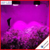 Veg/цветя 504W УДАР СИД растут света для медицинских заводов