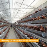 le fournisseur de cage de poulet d'oeufs a combiné avec soulever l'ourself d'industrie