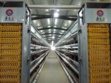 Het Huis van het Gevogelte van de Kip van de Structuur van het staal met Volledige Apparatuur