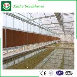 Tuin/het Groene Huis van het Blad van het Polycarbonaat van de Tunnel van de Landbouw voor het Groeien van de Groente/van de Bloem