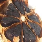 発酵させた黒いニンニクの有機性黒いニンニク