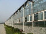 4mm 5mm abgehärtete Gewächshaus-Glas-Panels