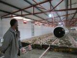 自動家禽装置が付いている鉄骨フレームの肉焼き器のニワトリ小屋