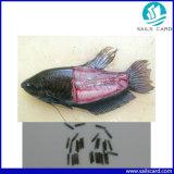 魚の小さい動物のためのスポイトが付いている1.4X8mmのマイクロチップ