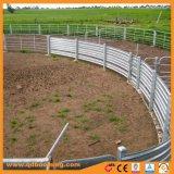 Gare de triage de mouton tubulaires en métal galvanisé ferme le panneau de clôture