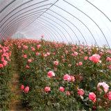 低価格のトンネルの温室のプラスチックフィルムの庭の温室