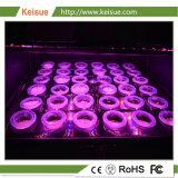36の穴が付いている皿を育てるHydroponicプラント