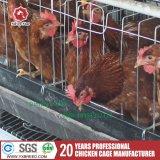 Le poulet de matériel d'aviculture met en cage le meilleur se vendant en Inde
