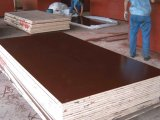 Constructionの防水Film Faced Plywood 1220X2440mm Using