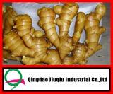 New Crop 2013 Garlic
