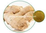 100%の自然なショウガのエキス: Gingerols 5%に20%