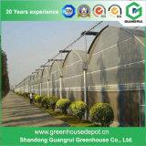 Serre chaude agricole de tunnel de film plastique simple d'envergure de coût bas
