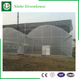 농업 다중 경간 채소밭 플라스틱 온실