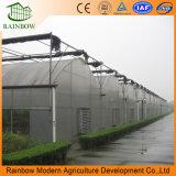 Estándar de alimentos estándar Multi Span Prefab Multi-Span Estructura de invernadero comercial