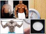 근육 질량 176 191에 있는 운동 증진을%s Frag 176-191