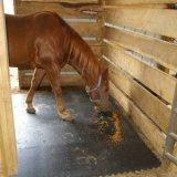 مواش يغرس أرضية أرضية مطّاطة ثابتة حصان حجر السّامة بقية حصائر