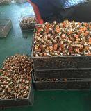 Cartouche en laiton de qualité du marché de l'Inde (AV-BC0004)