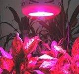 300W СИД растут светлыми для заводов растут