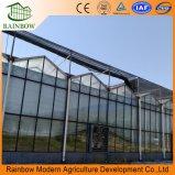 야채 재배지를 위한 다중 경간 유리제 온실