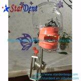 Testa fantasma del sistema di insegnamento di buona qualità di strumentazione dentale