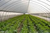 高品質のマルチスパンの農業のフィルムの温室