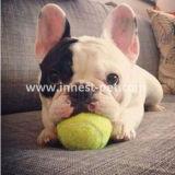Het mooie Duurzame Huisdier kauwt de Bal van het Tennis van de Opleiding van de Hond van het Stuk speelgoed