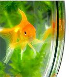 Cuvette fixée au mur de poissons réservoir acrylique de 5 gallons mini