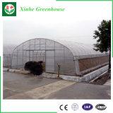 Singola serra poco costosa di agricoltura della pellicola della portata per la verdura ed il giardino