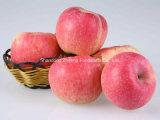 Gala fresca Apple con alta calidad