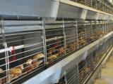 Kip van de Apparatuur van de Kooi van het Gevogelte van de kip de Hete Ondergedompelde Gegalvaniseerde Kleine voor Jonge kip (het frame van het type van H)