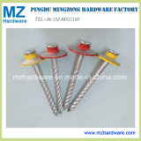 Buntes Lack-Kopf-Galvano galvanisierte Polierregenschirm-Kopf-Dach-Nägel