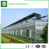 Casa verde de vidro com projeto e a alta qualidade bonitos