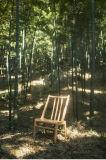 Cadeira de madeira moderna bonito popular da madeira contínua da faia