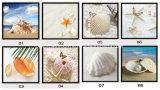 집 벽 커튼 훈장을%s 바다 쉘 사진