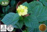 Alcaloidi dell'estratto 10% di Cordifolia del Sida; 5:1; 10:1