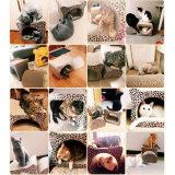 Eindeutige späteste gewölbtes Papier Scratcher Set-Entwurfs-Katze-Spielwaren