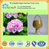 Poudre d'extrait de fleur de géranium
