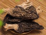 유기 버섯 2018 말린 그물버섯 또는 Morchella