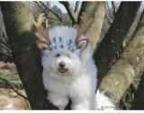 Usure de tête d'animal familier de vacances de décoration de cheveu de renne de crabot de Noël