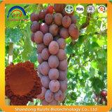 Il seme dell'uva rossa estrae la polvere Gse