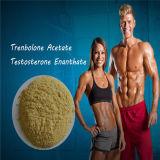回帰年のステロイドのTrenbolone Enanthate Parabolan Tren Eの粉