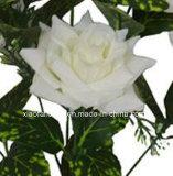 로즈 (XF30031)의 인공 플라스틱 또는 실크 꽃 단 하나 줄기