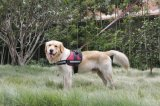 Empresa High-End fácil caminhada de Segurança de Hardware do Chicote Dog Colar Pet (YJ93474)