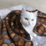 工場卸し売り環境に優しいプラシ天PPの綿耐久猫犬毛布