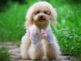 Pêlos de animais arcos clipes de cabelo cão de estimação Grooming Produto Pet Acessórios