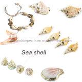 Mode bijoux Sea Shell Pendentif avec plein d'or Bracelet à breloque Rim femmes Earrings Necklace
