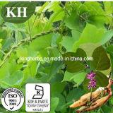 Extrait de Pueraria, Extrait de racine de Kudzu 40-80% Isoflavones