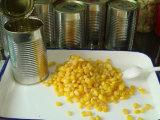 Céréales de maïs sucré en conserve 2017
