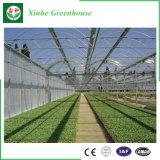 野菜および庭のための安い単一のスパンのフィルムの農業の温室